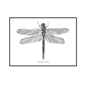 The Dragonfly plakat Creative Dot Mathilde Olsen