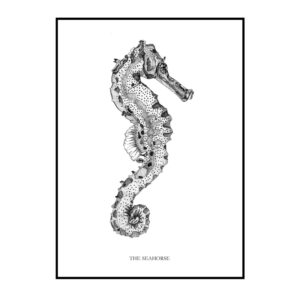 The Seahorse plakat Creative Dot Mathilde Olsen