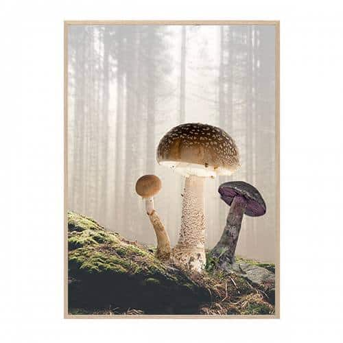 MUSHROOMS PLAKAT HANG IT UP CREATIVE DOT